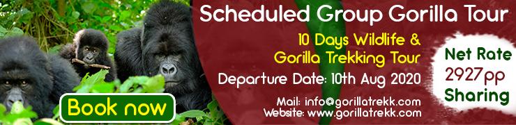 www.gorillatrekk.com